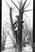 Alice Craig in catalpa tree